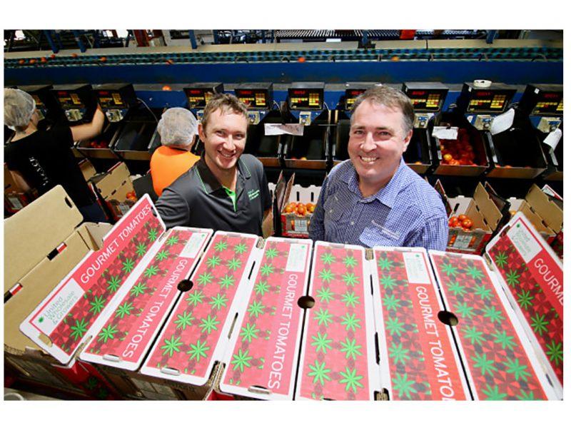 بسته بندی کارتنی گوجه فرنگی
